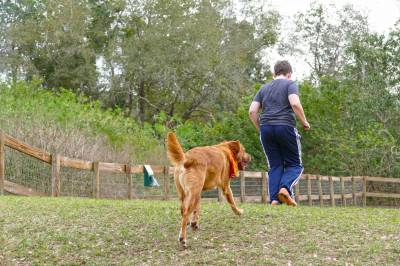 Photo illustrating Waggin' Trails Dog Park at Fort Wilderness