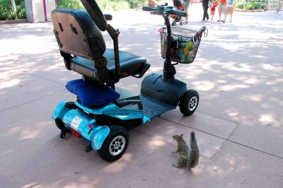 Photo illustrating Squirrel at Epcot
