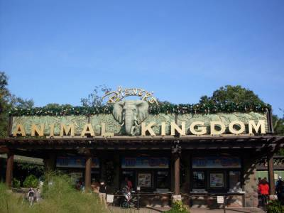 Photo illustrating <font size=1>Disneys Animal Kingdom Entry