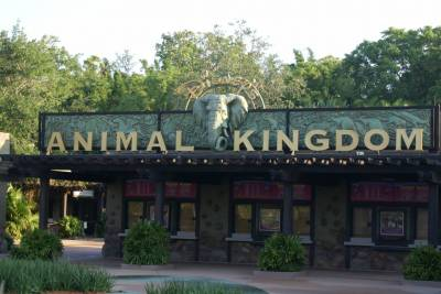 Photo illustrating Animal Kingdom Ticket Station