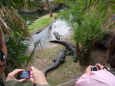 Photo illustrating Wild Animal Trek Crocodiles