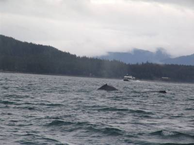 Juneau - whale watching photo