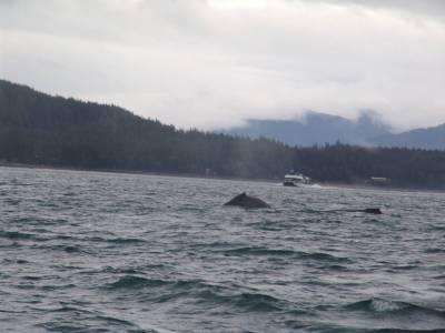 Juneau - whale watching photo