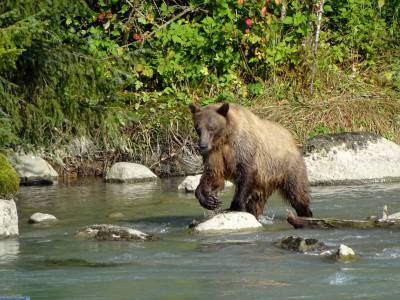 Evening Wildlife Expedition in Skagway, Alaska