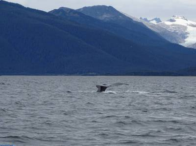 Alaska Whales and Glaciers Photo Safari in Juneau