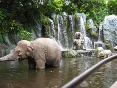 Photo illustrating <font size=1>Jungle Cruise - Elephant Bathing Pool