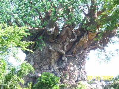 Photo illustrating <font size=1>Tree of Life
