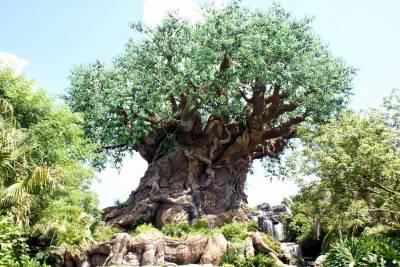 Photo illustrating <font size=1>Animal Kingdom - Tree of Life