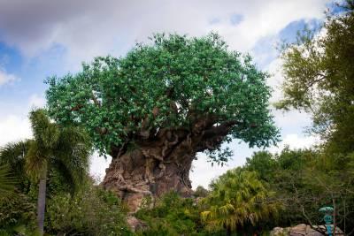 Photo illustrating <font size=1>Animal Kingdom - The Tree Life
