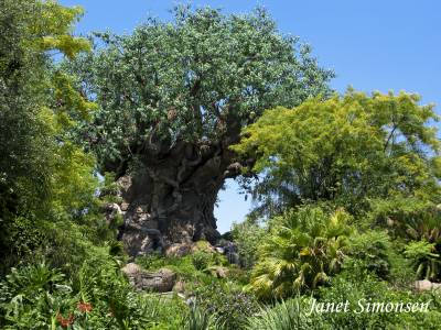 Photo illustrating <font size=1>Animal Kingdom - Discovery Island