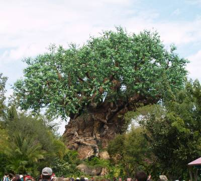 Photo illustrating <font size=1>Animal Kingdom - Tree of Life