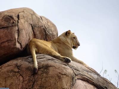 Photo illustrating <font size=1>Animal Kingdom - Kilimanjaro Safaris
