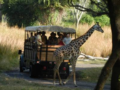Photo illustrating giraffe in front of Wild Africa Trek truck