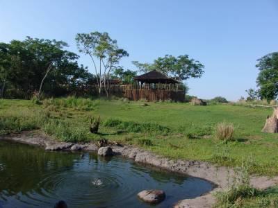 Photo illustrating <font size=1>Animal Kingdom - Wild Africa Trek from safari