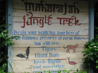 Photo illustrating <font size=1>Animal Kingdom - Maharajah Jungle Trek