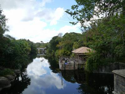 Photo illustrating <font size=1>Animal Kingdom - river view