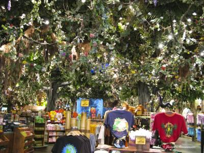 Rainforest Cafe At Disney S Animal Kingdom Discounts