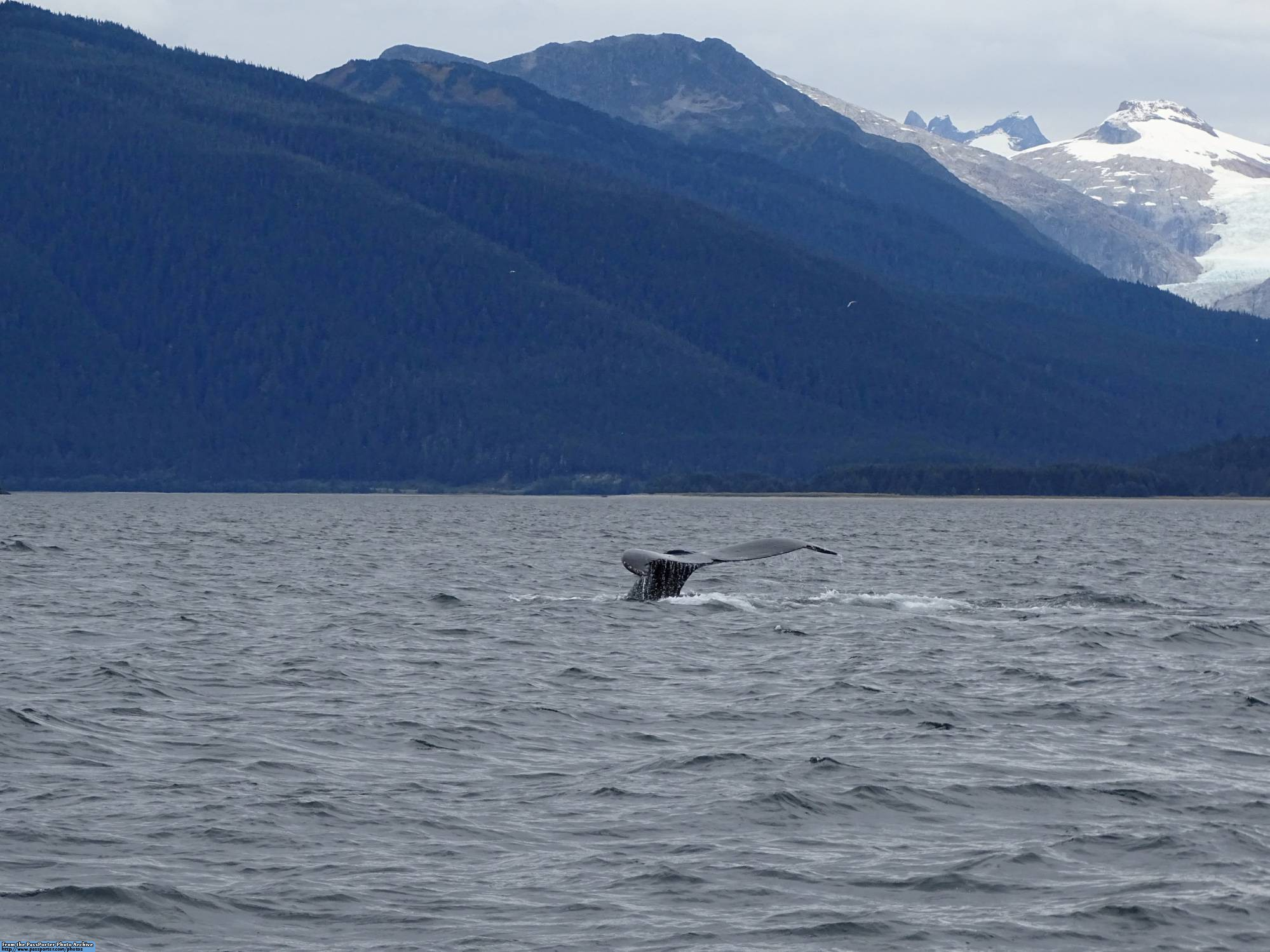 Enjoy the Whales and Glaciers Photo Safari in Juneau while on your Disney Cruise to Alaska | PassPorter.com