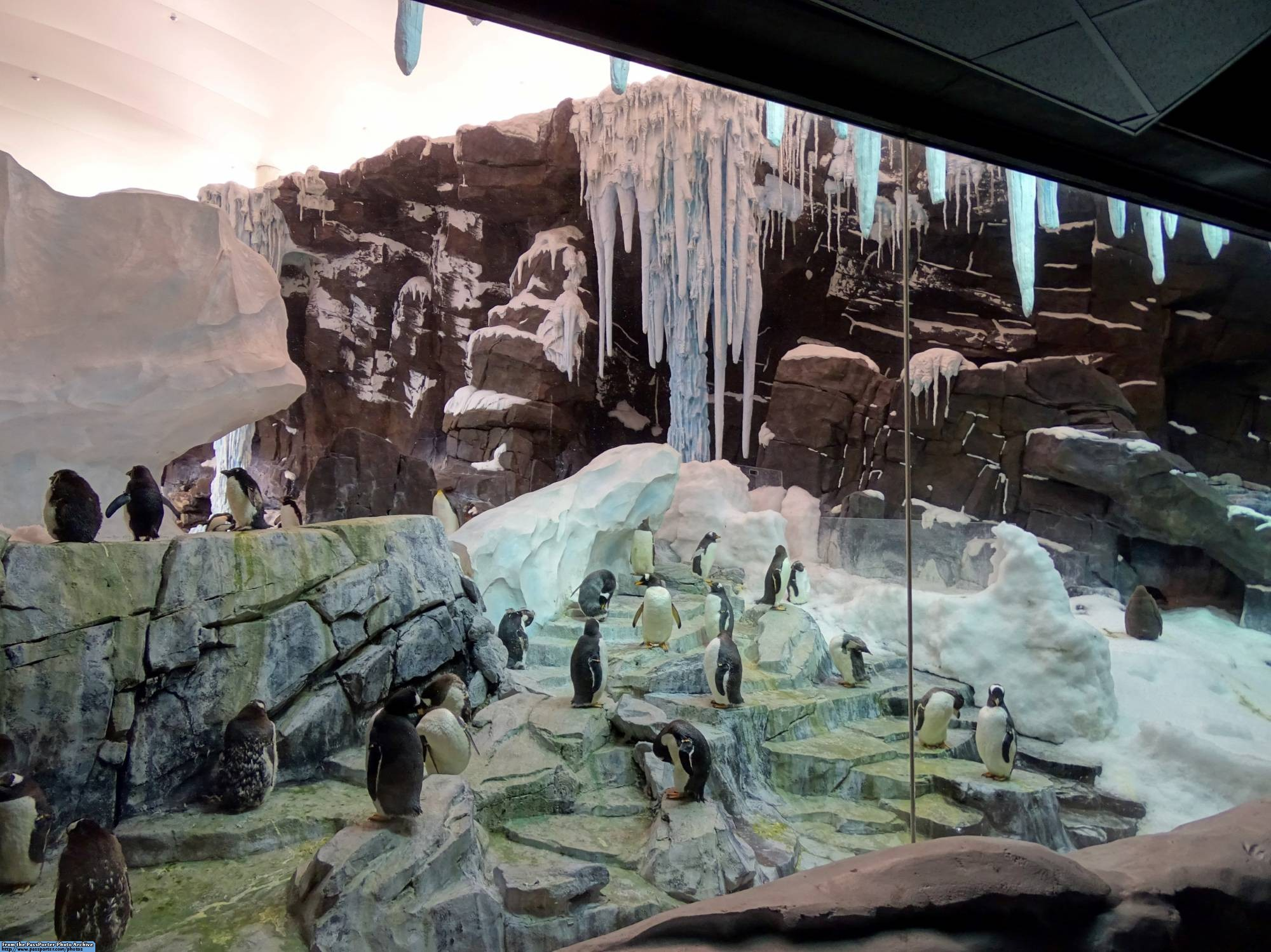 Explore Antarctica: Empire of the Penguin at SeaWorld Orlando |PassPorter.com