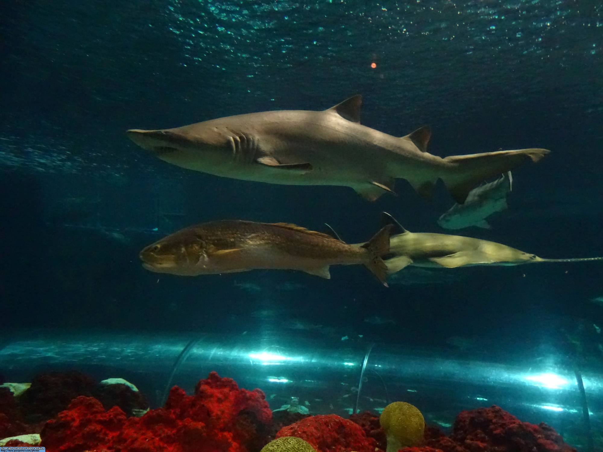 Dine with the sharks at SeaWorld Orlando |PassPorter.com