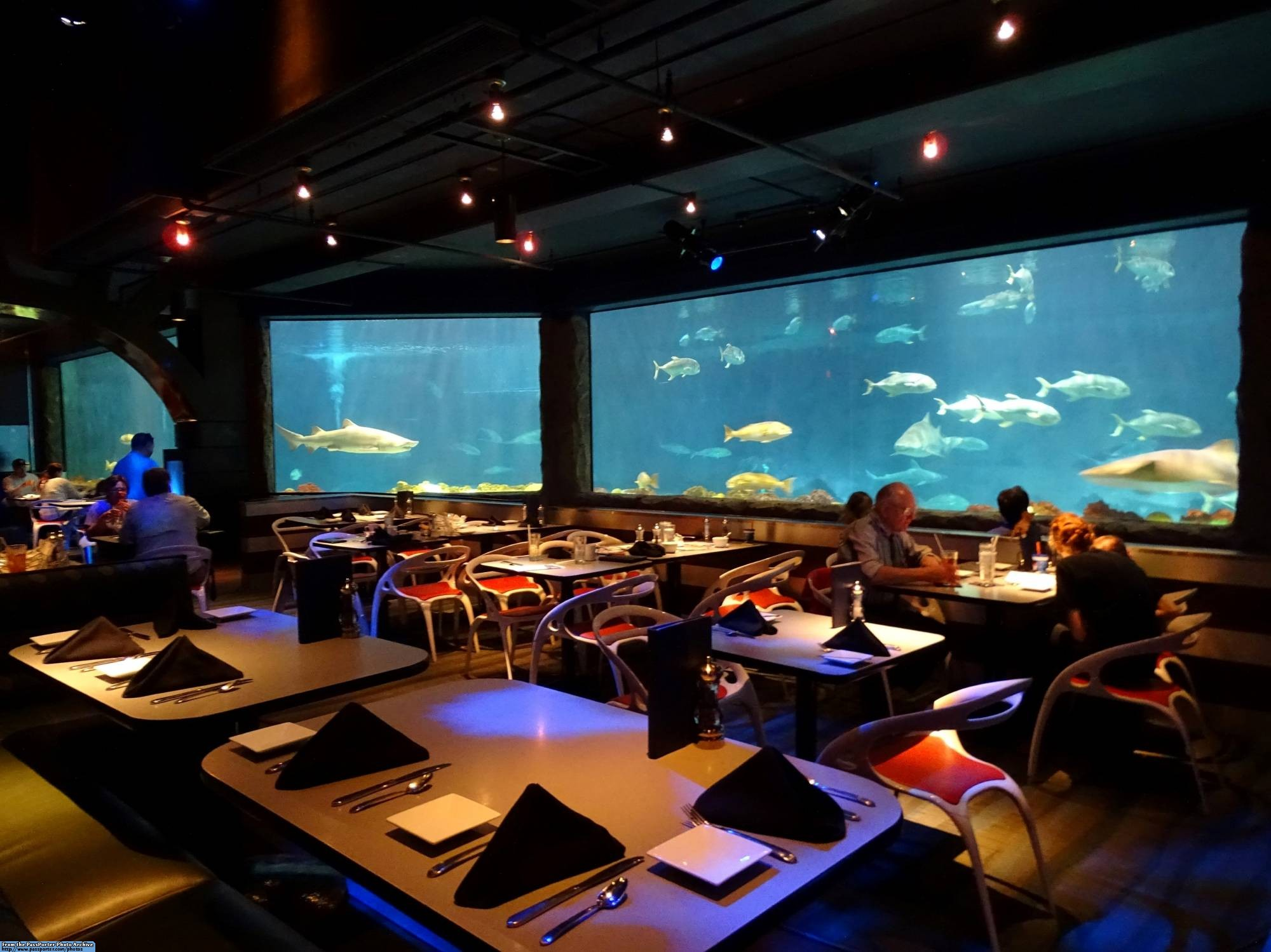 Dine With The Sharks At Seaworld Orlando Pporter