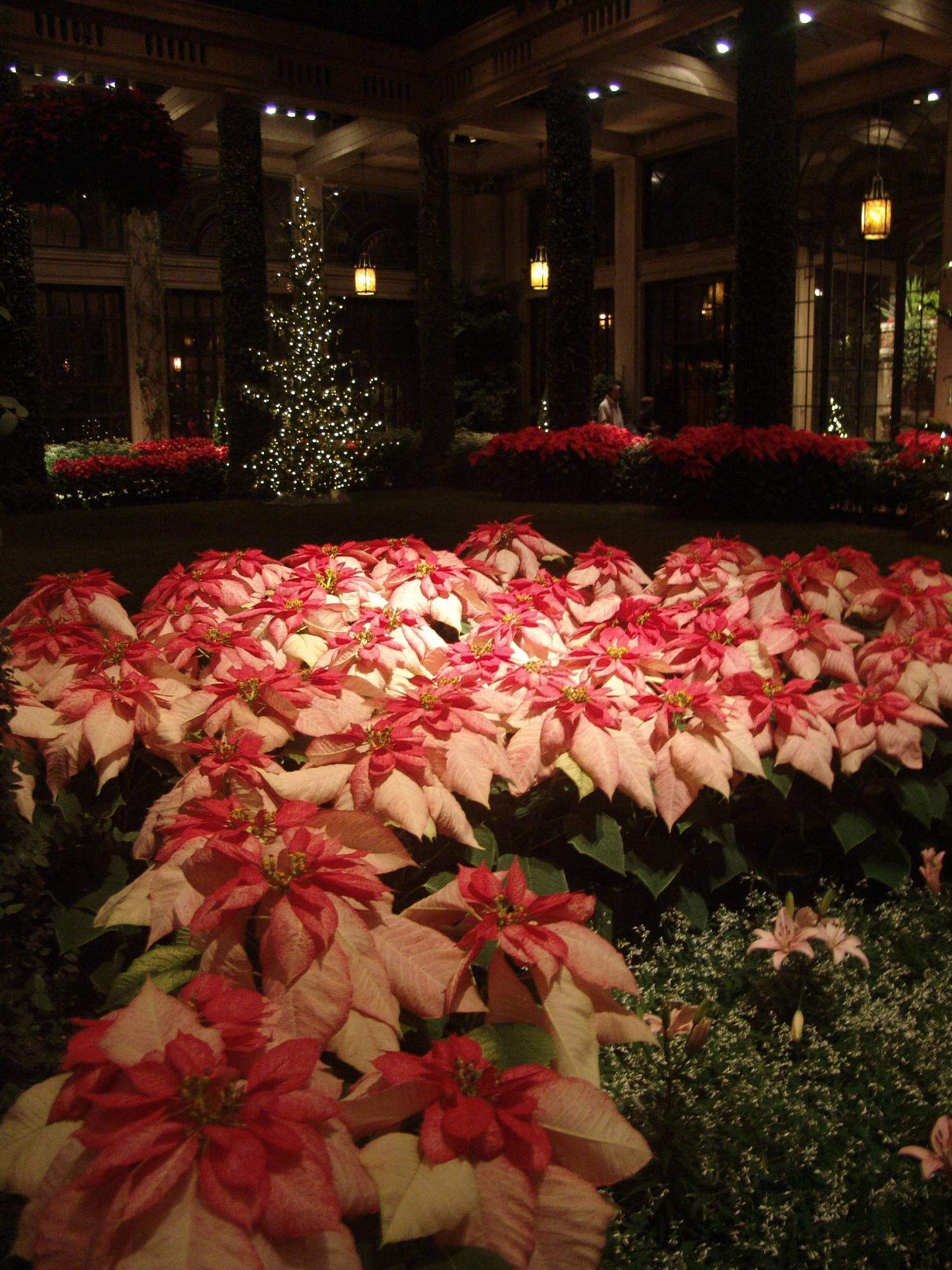Longwood Gardens - Christmas display photo
