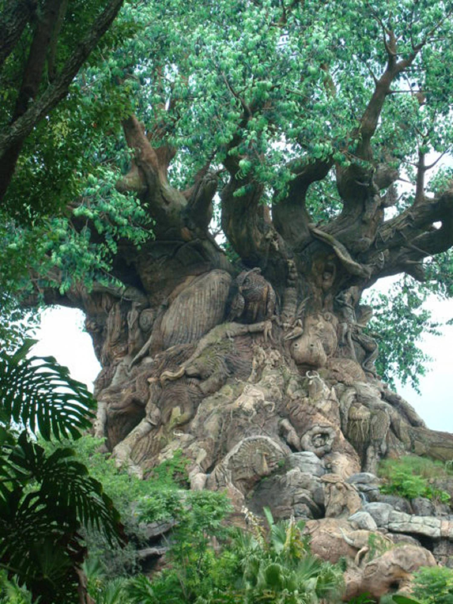 Tree of Life in Oasis photo