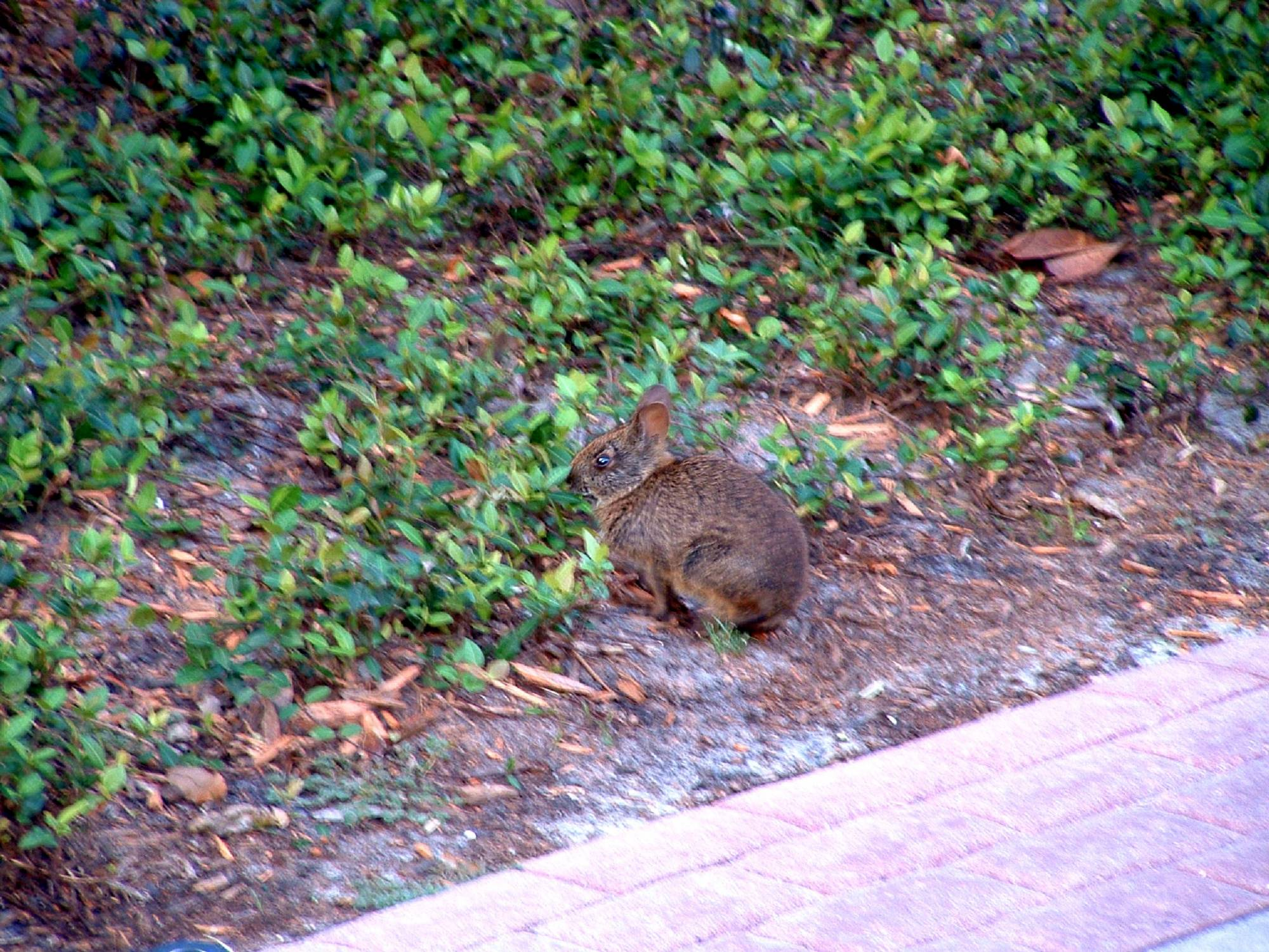 Grand Floridian - Wildlife