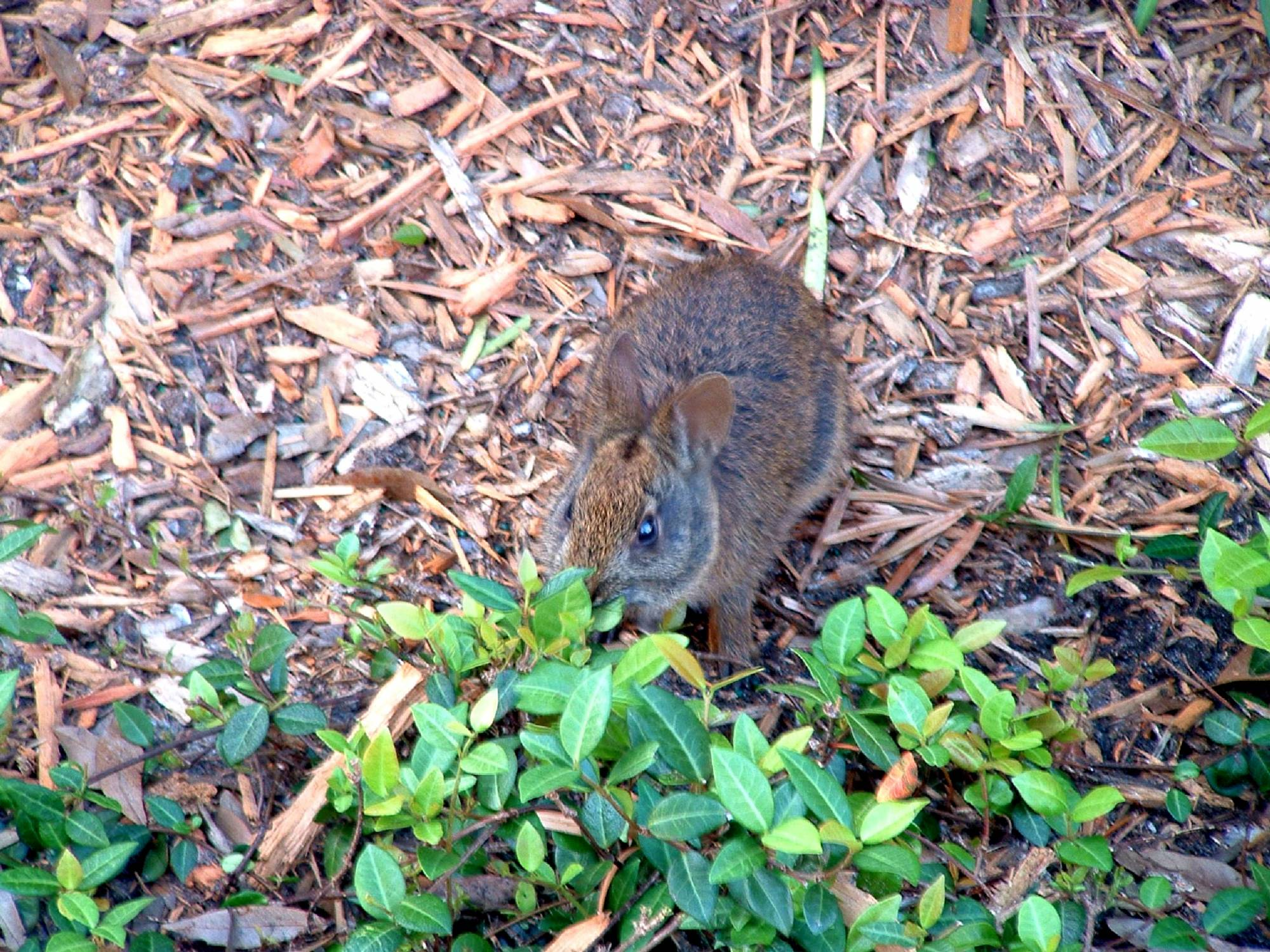 Disney's Grand Floridian - Wildlife