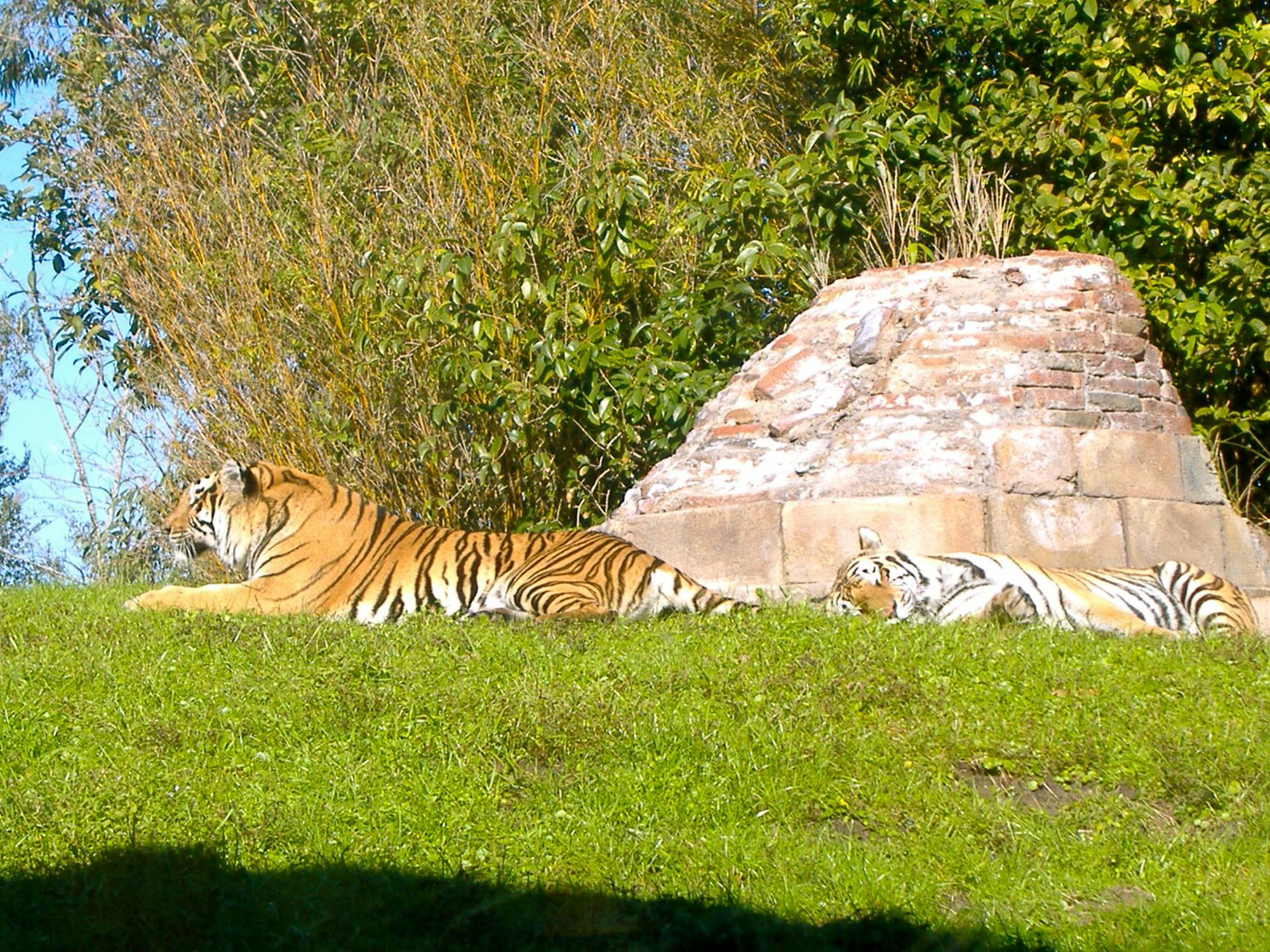 Maharajah Jungle Trek - Tigers