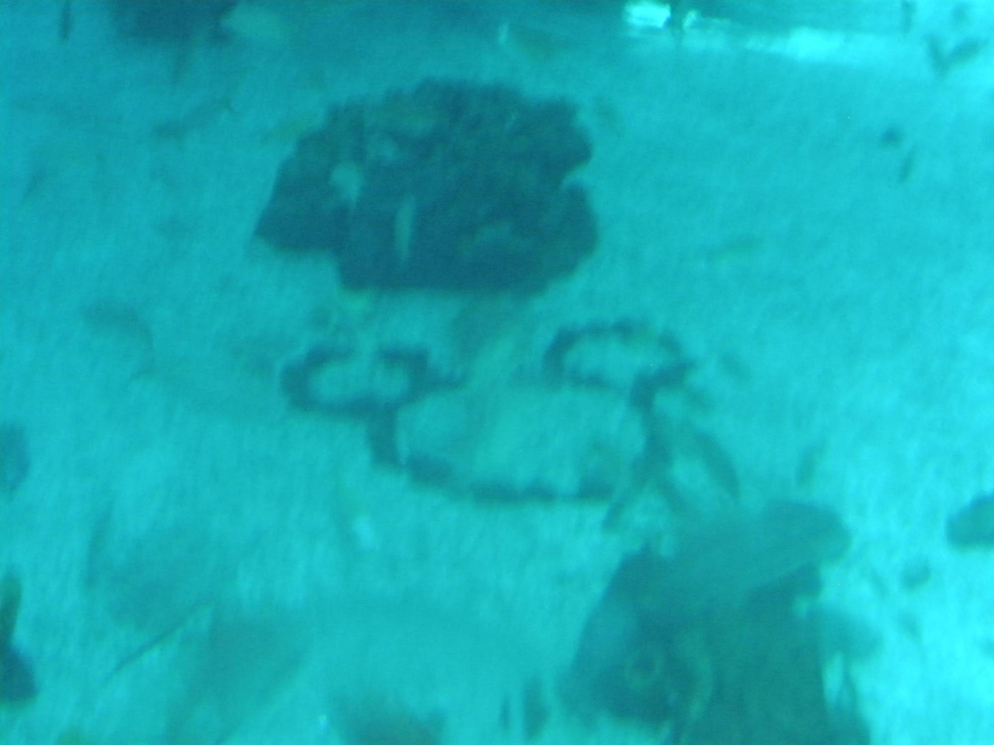 Epcot Hidden Mickey in the Seas