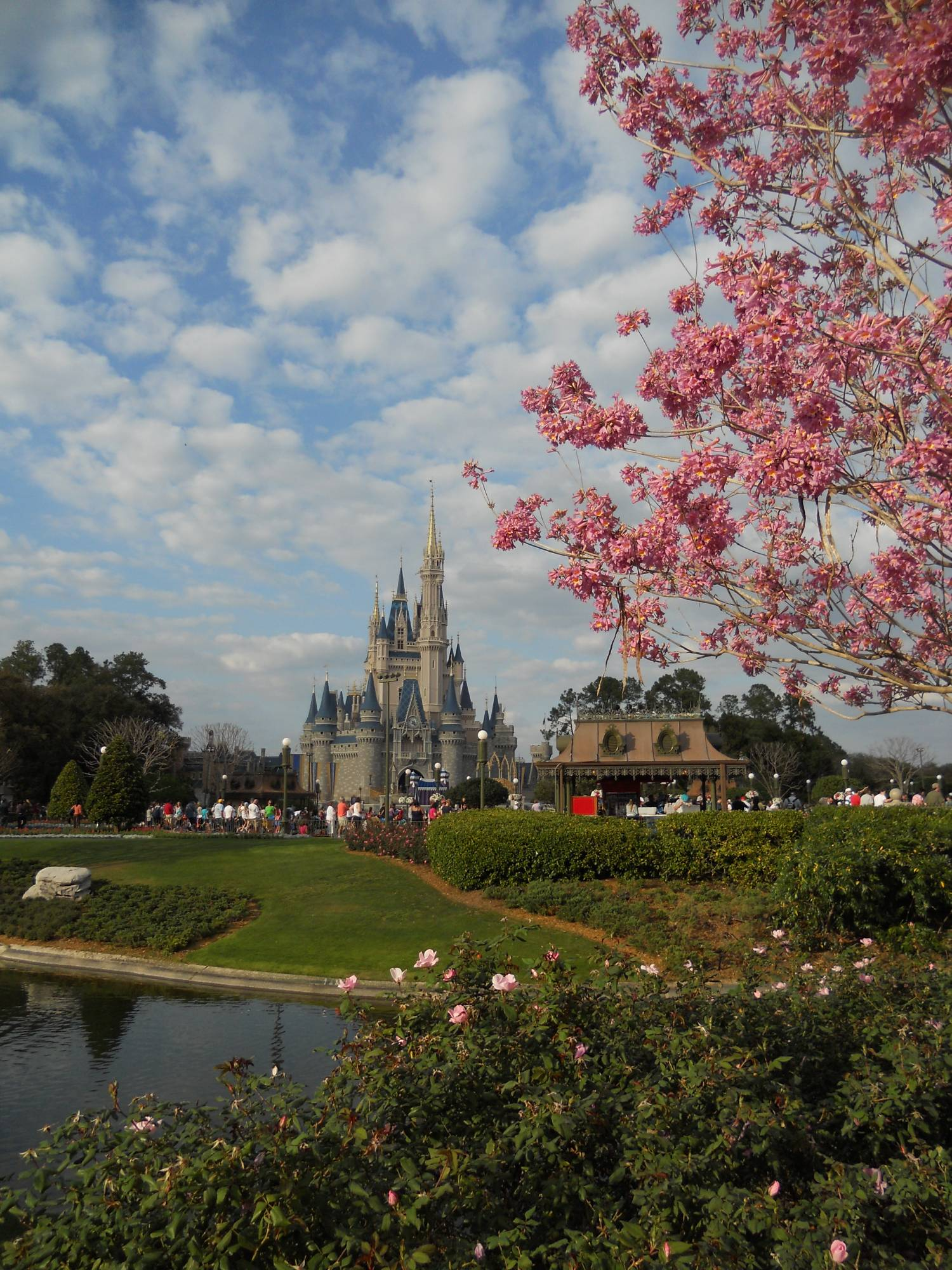 Springtime at the Magic Kingdom