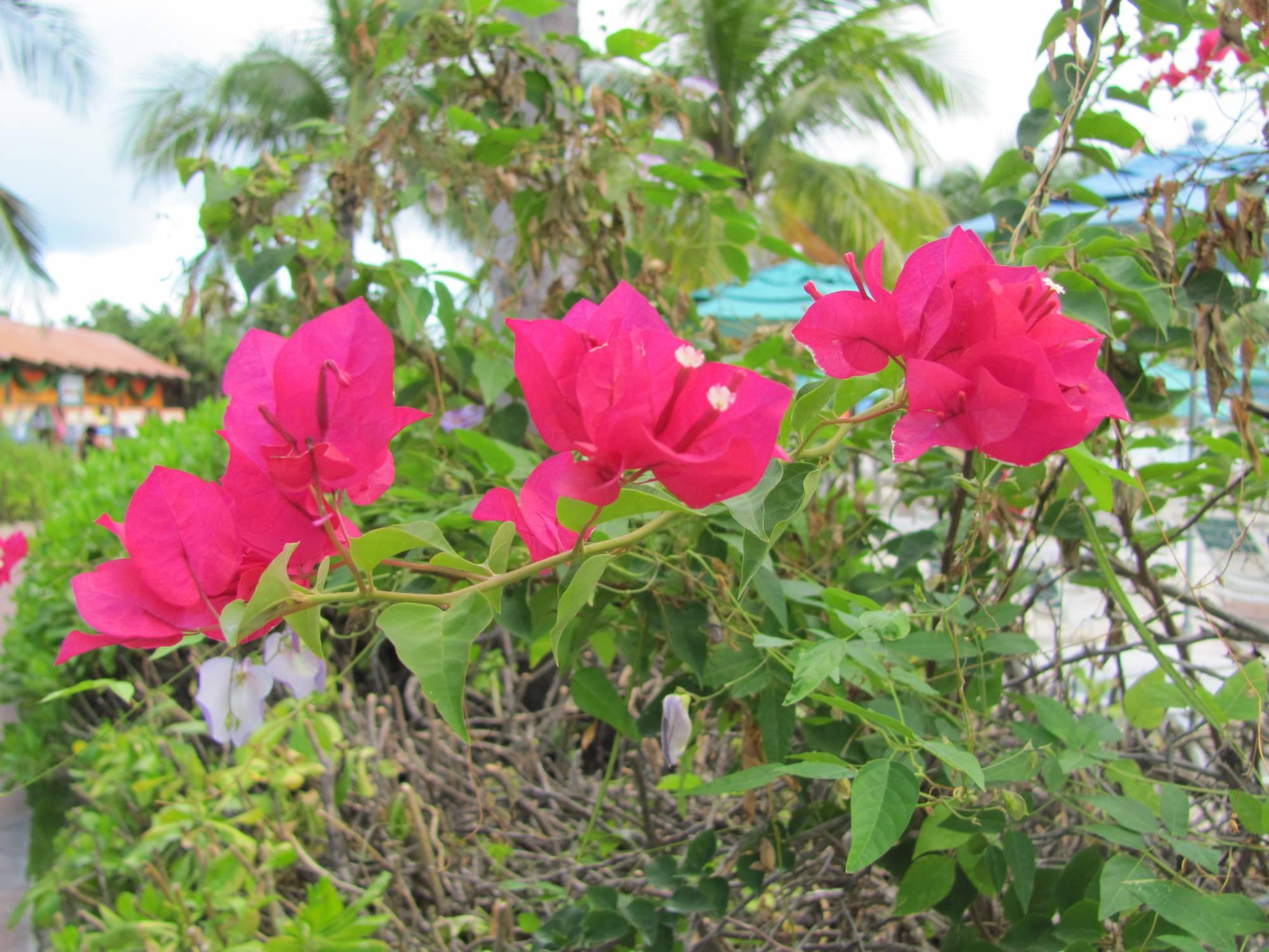Castaway Cay Foliage