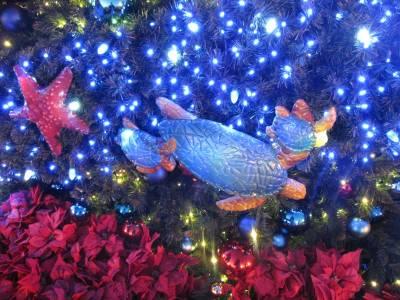 SeaWorld San Diego Christmas Celebration is a Joy to the World