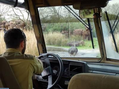 Animal Kingdom - Kilimanjaro Safari