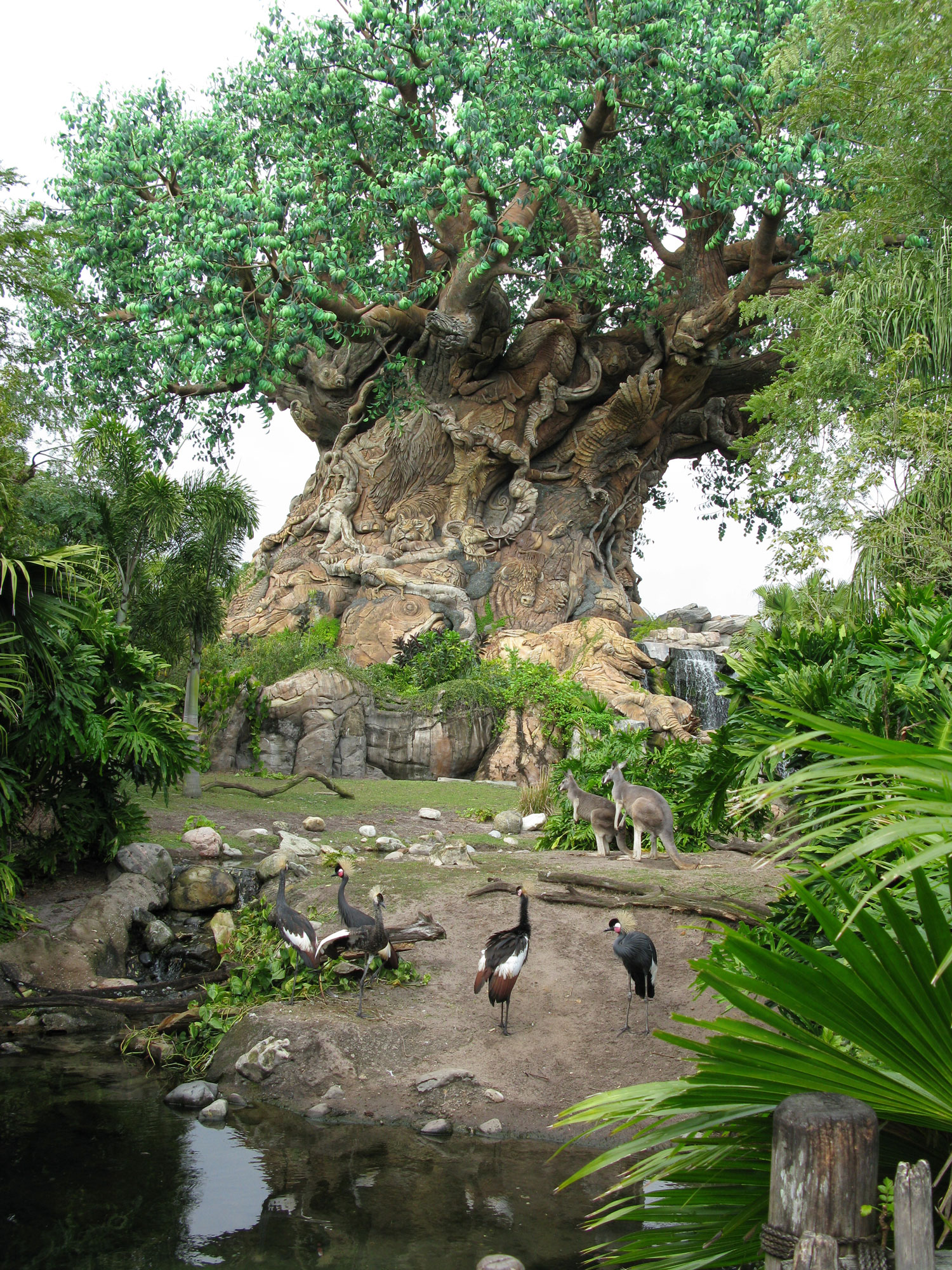 Discovery Island Trails - birds and Tree of Life