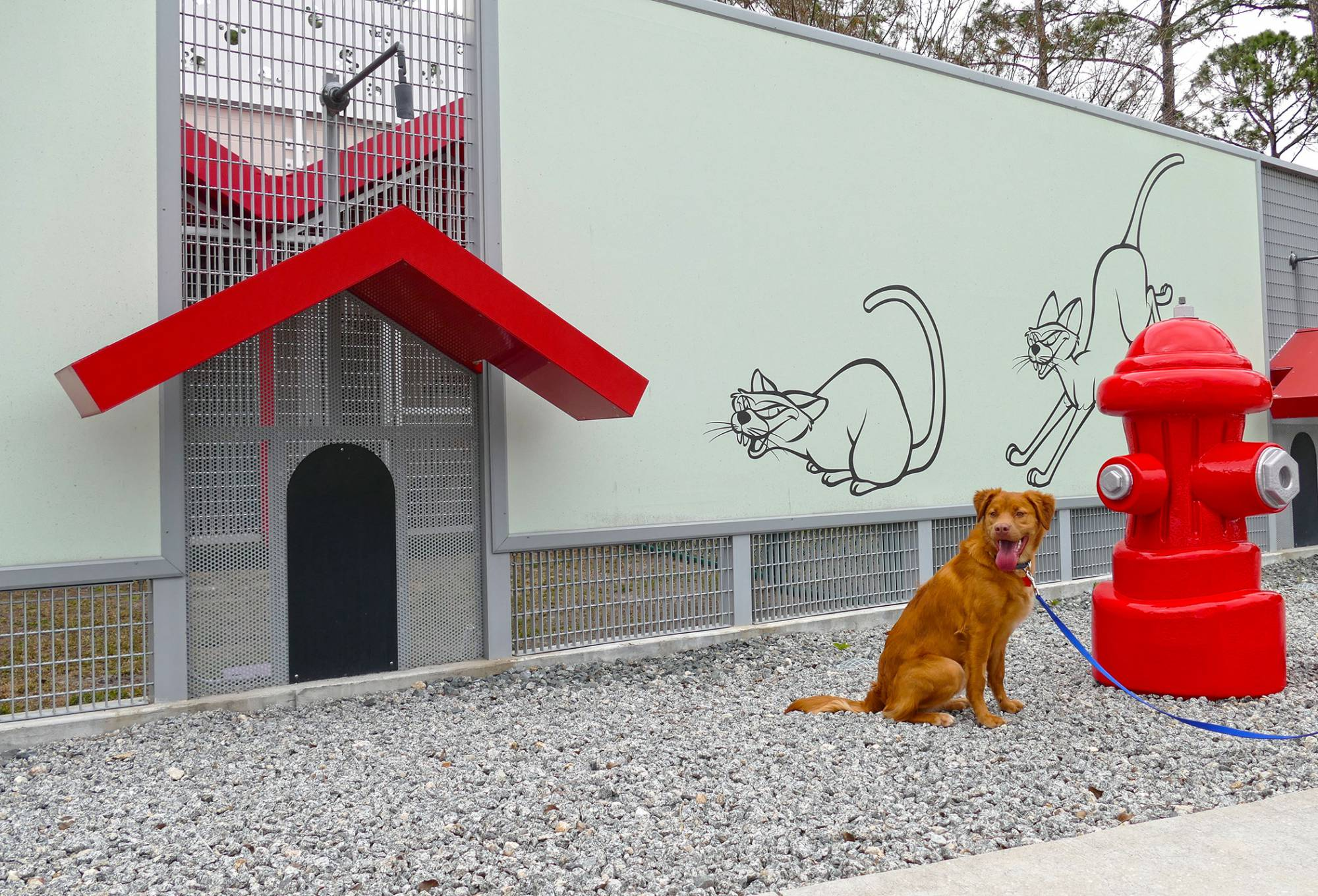 Photo Op at Best Friends Pet Care Kennel