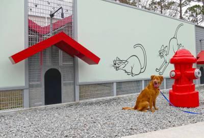 Photo op at best friends pet care kennel passporter photos for Pet boarding near disney world