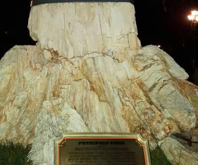 Disneyland Frontierland petrified tree