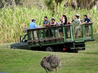 Busch Gardens Serengeti Safari Passporter Photos