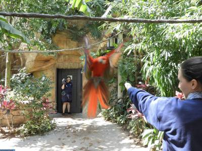 Macaws in flight!