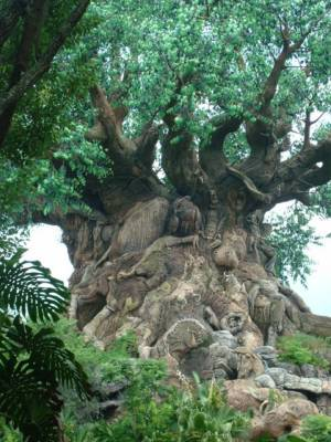 Tree of Life in Oasis